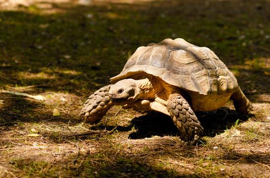Schildkröten Steckbrief - Bilder, Verhalten, Rassen und Arten