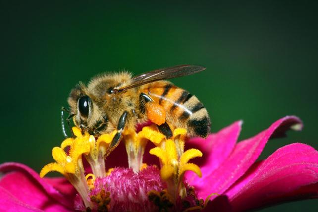 Bienen Steckbrief - Bilder, Verhalten, Rassen und Arten