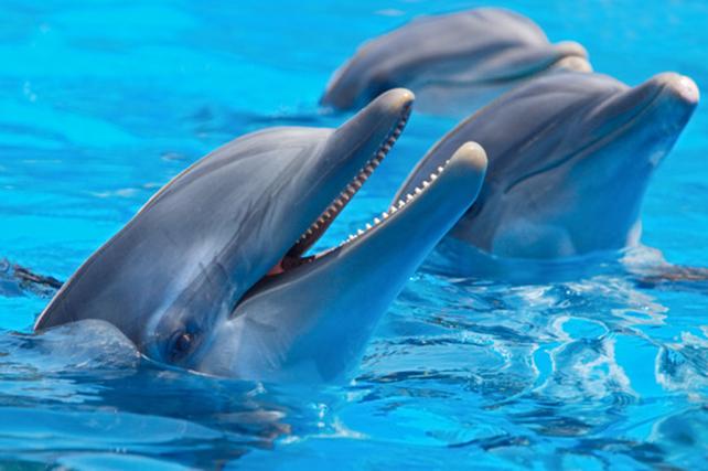 Delfine Steckbrief – Bilder, Verhalten, Rassen und Arten