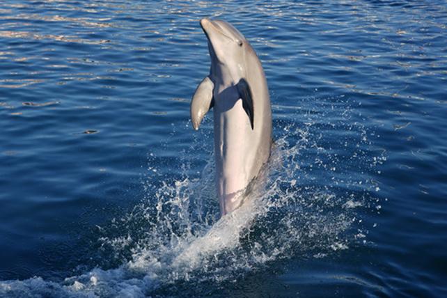 delfine-2