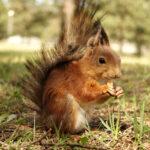 Eichhörnchen Steckbrief – Bilder, Verhalten, Rassen und Arten