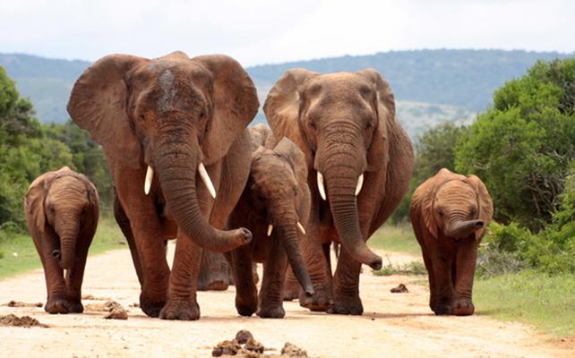 Elefanten Steckbrief - Bilder, Verhalten, Rassen und Arten