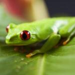 Frosch Steckbrief – Bilder, Verhalten, Rassen und Arten