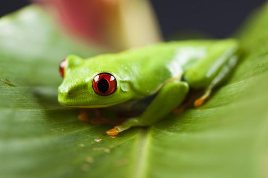 Frosch Steckbrief - Bilder, Verhalten, Rassen und Arten