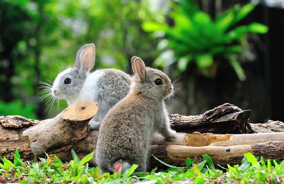 Kaninchen Steckbrief - Haltung, Pflege, Verhalten