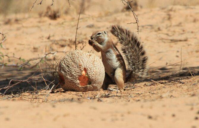 Erdhörnchen und Baumhörnchen Steckbrief - Allgemein, Arten, Merkmale