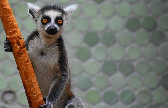 Tierpark Gettorf -