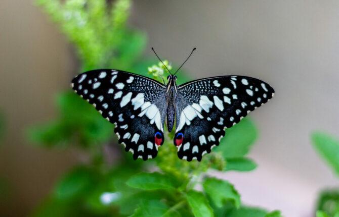 Schmetterlinge - Arten in der Übersicht