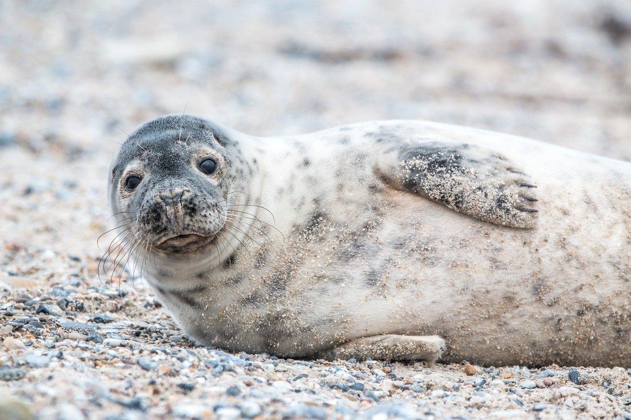 Robben – Aussehen & Lebensweise