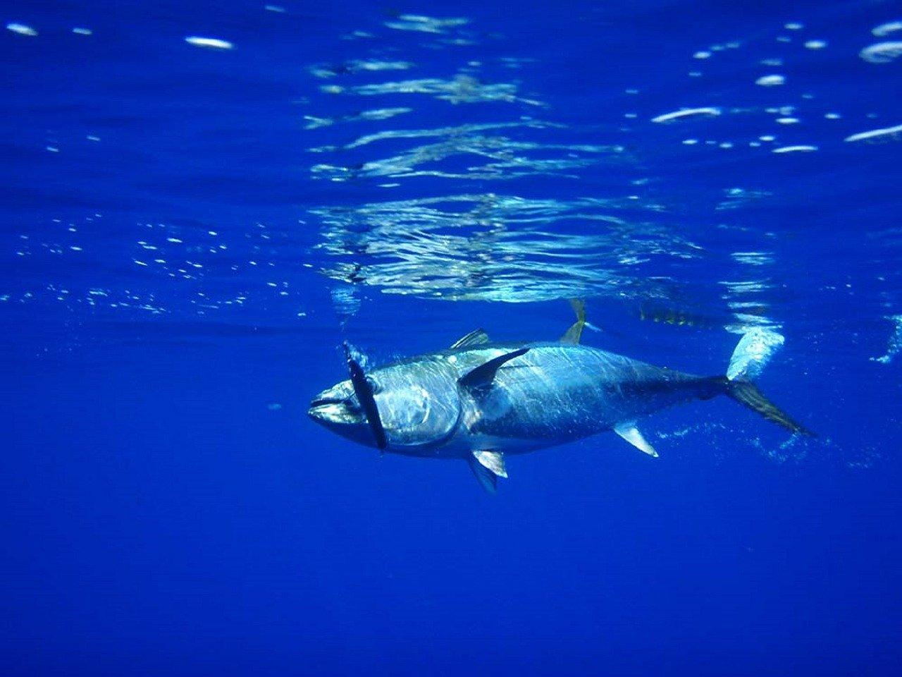 Echte Knochenfische Steckbrief – Arten, Stammesentwicklung, Merkmale