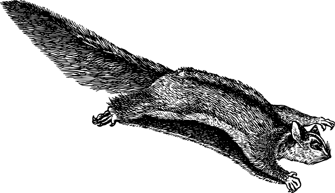 Zwerggleithörnchen Steckbrief – Aussehen, Lebensweise, Fortpflanzung