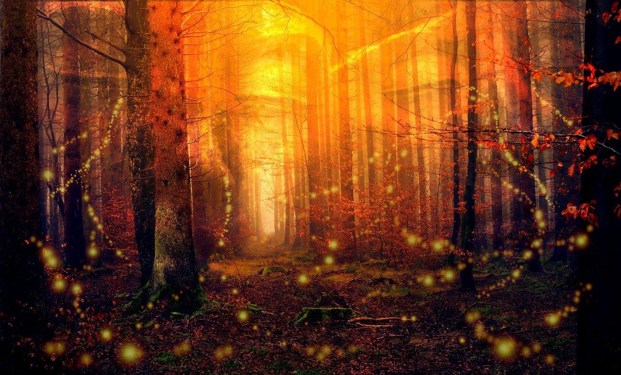 Leuchtkäfer, Glühwürmchen Steckbrief – Leuchtorgane, Nahrung und Larven
