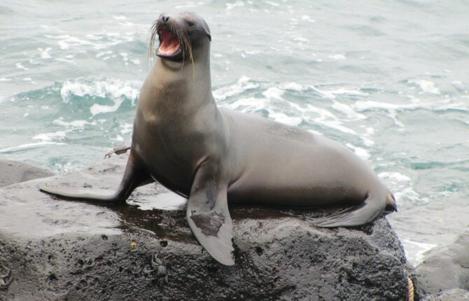 Española Island - Galápagos-Inseln Steckbrief & Bilder