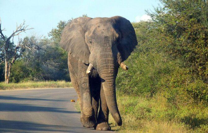 Kruger National Park - Südafrika Steckbrief & Bilder