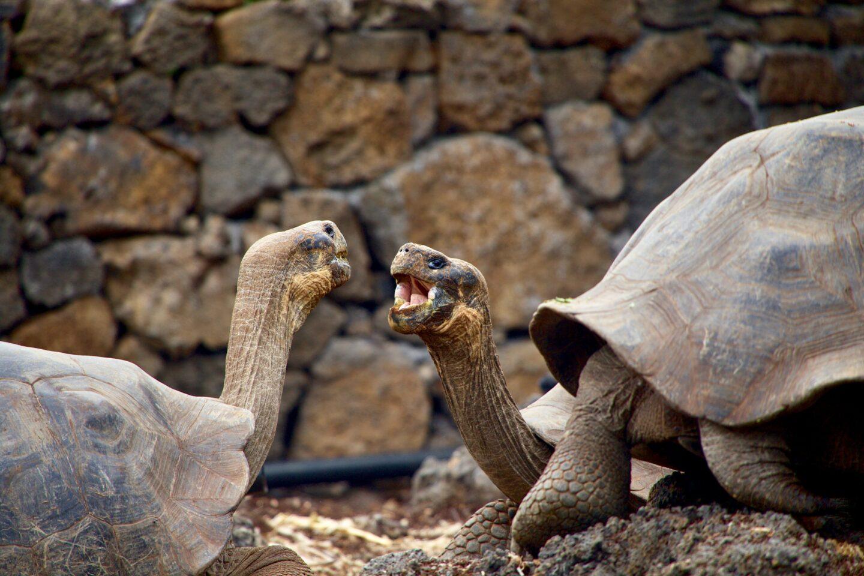 Galápagos-Inseln – Steckbrief & Bilder