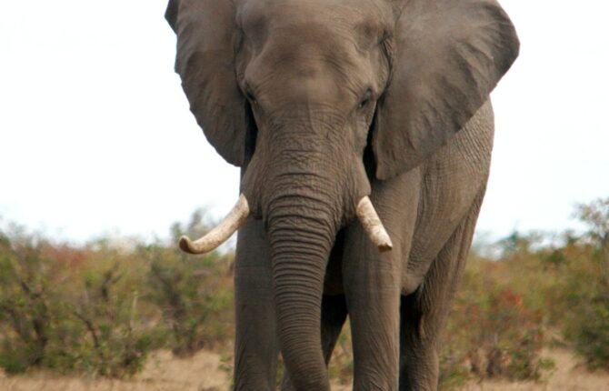 Krüger National Park in Südafrika - Geschichte