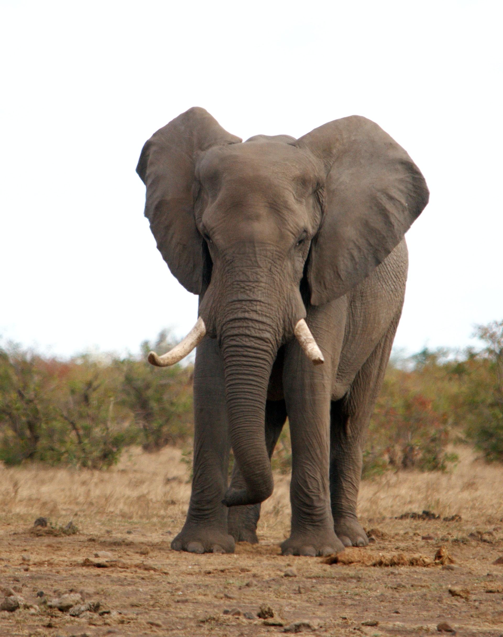 Krüger National Park in Südafrika – Geschichte