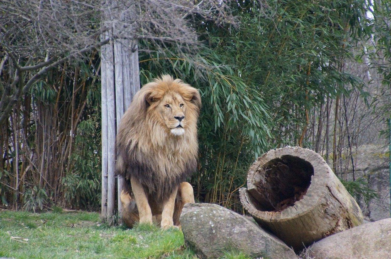 Leipzig Zoo – Steckbrief & Bilder
